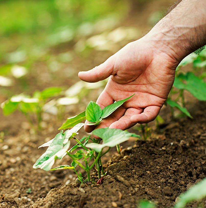 Mao pegando planta verde que esta plantada na terra